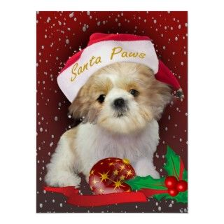 Holiday print, a Christmas design, displays the Shih Tzu puppy with