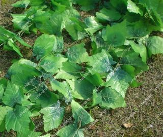 2FT Artificial Grape Leave Vine Wedding Home Decor Garlands IVY Plant