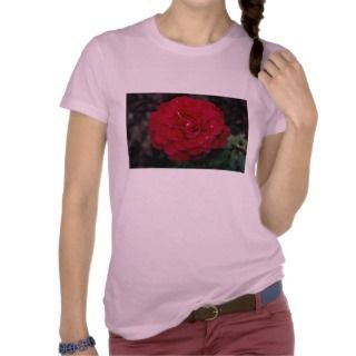 Beautiful Hybrid Tea Rose Mister Lincoln Tshirt