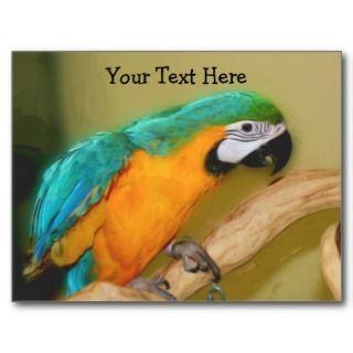 Blue Gold Macaw Parrot Customizable Postcard