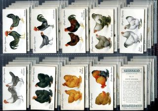 Tobacco Card Set John Player Poultry Hen Chicken Rooster etc 1931