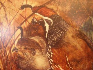 Laura Batt California Quails Birds Eggs Nest Framed