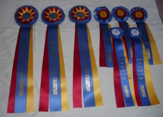 Horse Show Champion Ribbons Lot Eight Champion Ribbons No Reserve