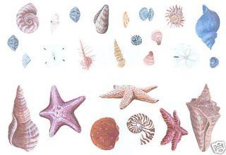 Sea Shells Decorative Wall Decal Transfers Wall Decor