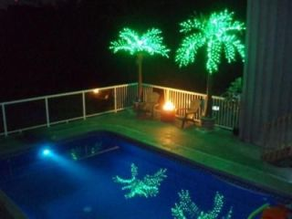 Most Realistic LED Lighted Palm Tree   10 ft. tall