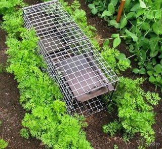Small Game Live animal cage trap squirrel,mink, Rabbit live catch trap