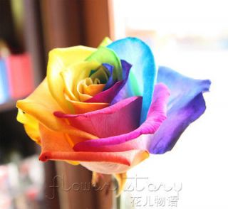 100+ Seeds Rare Holland Rainbow Rose Flower Seed To Your Lover ITEM