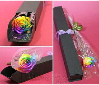BEAUTIFUL FLOWERING ROSES 50 PCS ROSE SEEDS RAINBOW COLORS N4488